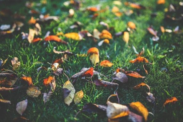 jesień - jesienna lista zadań